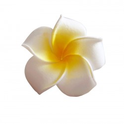 Fleur de Frangipanier en...